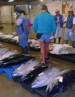 fish auction